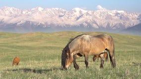 Paard op een heuvelig weiland stock footage