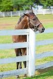 Paard op een landbouwbedrijf Stock Fotografie