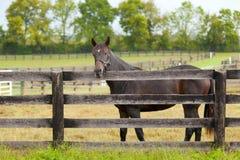 Paard op een landbouwbedrijf Stock Afbeeldingen