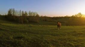 Paard op een landbouwbedrijf stock footage