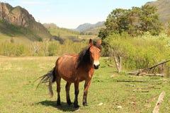 Paard op een open plek Royalty-vrije Stock Foto