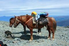 Paard op een pas van de bergberg. royalty-vrije stock afbeelding