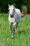 Paard op een weide stock foto