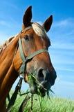 Paard op een weide Stock Foto's