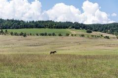 Paard op een weiland in de berg Royalty-vrije Stock Foto's