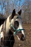 Paard op Gebied Stock Foto's