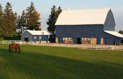 Paard op groene weilanden Royalty-vrije Stock Foto