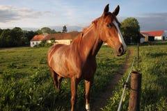 Paard op het Gebied Royalty-vrije Stock Afbeeldingen