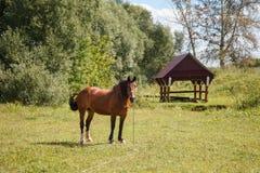 Paard op het gebied stock afbeeldingen