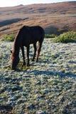 Paard op het gebied Stock Fotografie
