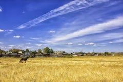 Paard op het gebied Royalty-vrije Stock Foto's