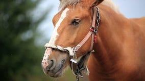 Paard op het gebied stock video