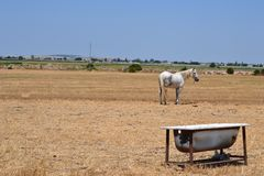 Paard op het gebied met bad stock foto