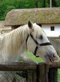 Paard op het landbouwbedrijf stock fotografie