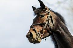 Paard op het landbouwbedrijf Royalty-vrije Stock Fotografie