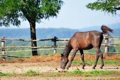 Paard op het landbouwbedrijf Stock Afbeeldingen