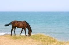 Paard op het strand royalty-vrije stock fotografie