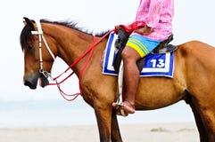 Paard op het strand Royalty-vrije Stock Foto's