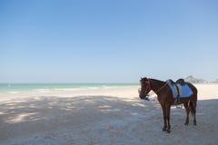 Paard op het strand Stock Afbeeldingen