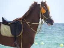 Paard op het strand in Tunesië, Afrika op een duidelijke dag tegen het blauwe overzees stock fotografie