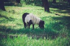 Paard op het weiland Stock Foto's