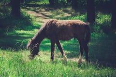 Paard op het weiland Stock Fotografie