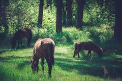 Paard op het weiland Stock Afbeelding