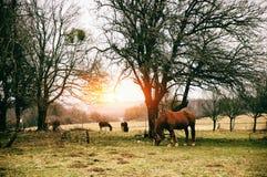 Paard op het zonnige weiland Stock Afbeeldingen