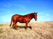 Paard op Heuveltop Royalty-vrije Stock Foto's