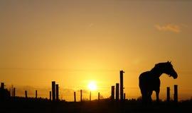 Paard op horizon backlit door zonsondergang Stock Foto