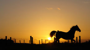 Paard op horizon backlit door zonsondergang Stock Foto's