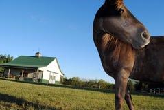 Paard op Landbouwbedrijf stock afbeelding