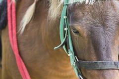 Paard op landbouwbedrijf Chokchai Stock Foto