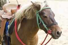 Paard op landbouwbedrijf Chokchai Stock Fotografie