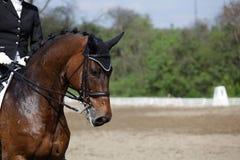 Paard op ras Royalty-vrije Stock Fotografie