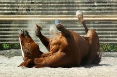 Paard op Rug Stock Foto's