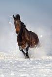 Paard op sneeuw in werking die wordt gesteld die stock foto