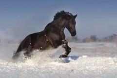 Paard op sneeuw in werking die wordt gesteld die stock foto's