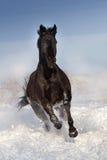 Paard op sneeuw in werking die wordt gesteld die royalty-vrije stock afbeelding