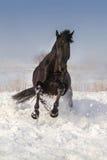 Paard op sneeuw in werking die wordt gesteld die stock fotografie