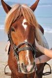 Paard op strand Stock Foto