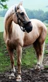 Paard op weiland   royalty-vrije stock fotografie