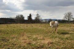 Paard op weiland Stock Afbeelding