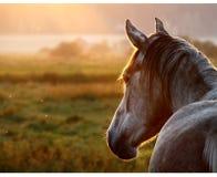 Paard op weiland bij de zomeravond Stock Foto