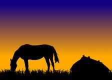 Paard op weiland bij zonsondergang dichtbij stal vector illustratie