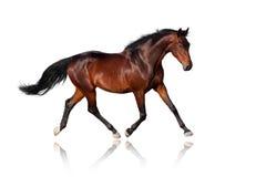 Paard op wit Stock Afbeelding