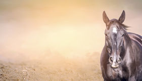 Paard op zandachtergrond, banner Royalty-vrije Stock Afbeelding