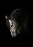 Paard op zwarte Stock Afbeelding