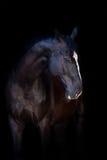 Paard op zwarte royalty-vrije stock afbeelding
