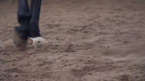 Paard opleiding close-up, hoeven, benen van een paard die langs het zand lopen de voorbenen van het paard zijn gebonden met speci stock footage